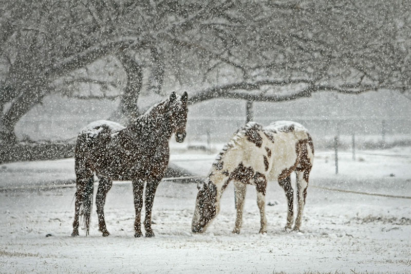 Sal para nieve que no llega - Sal Roca
