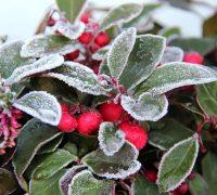 Vegetales y bajas temperaturas - Sal Roca